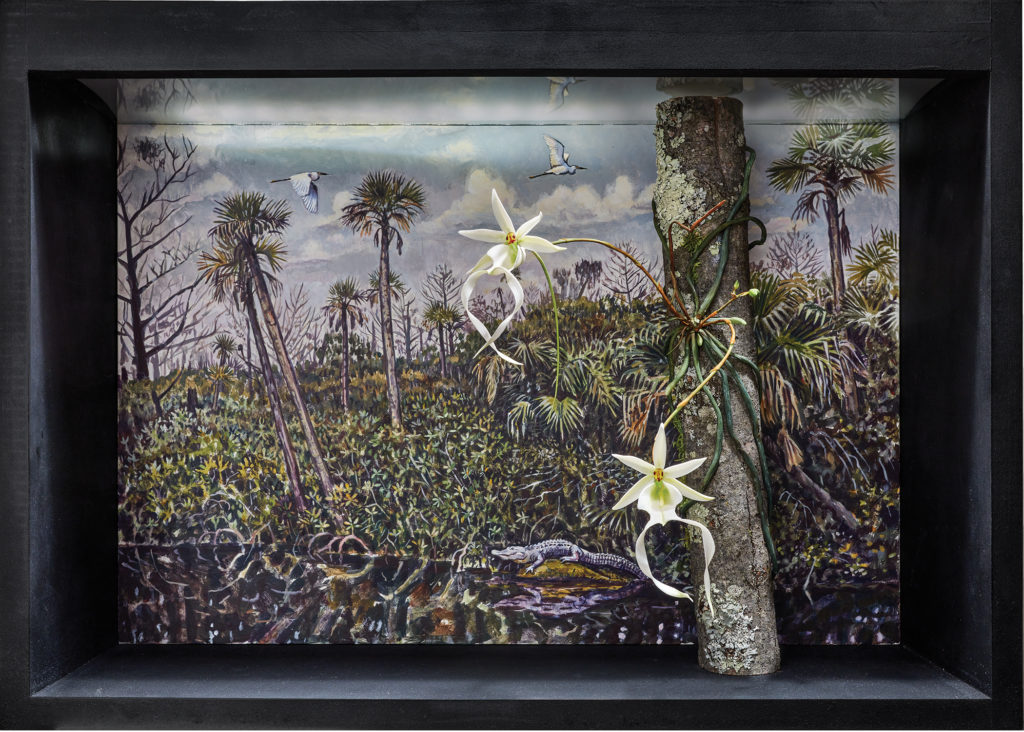 "James Prosek, ""Paradise Lost 2 (Ghost Orchid, Everglades)"" (2019)"