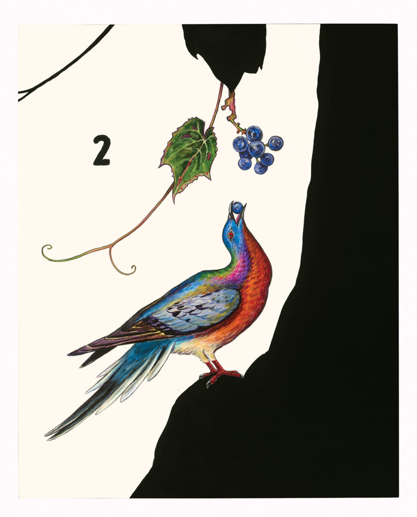 "James Prosek, ""Passenger Pigeon (with Wild Grapes)"" (2015)"