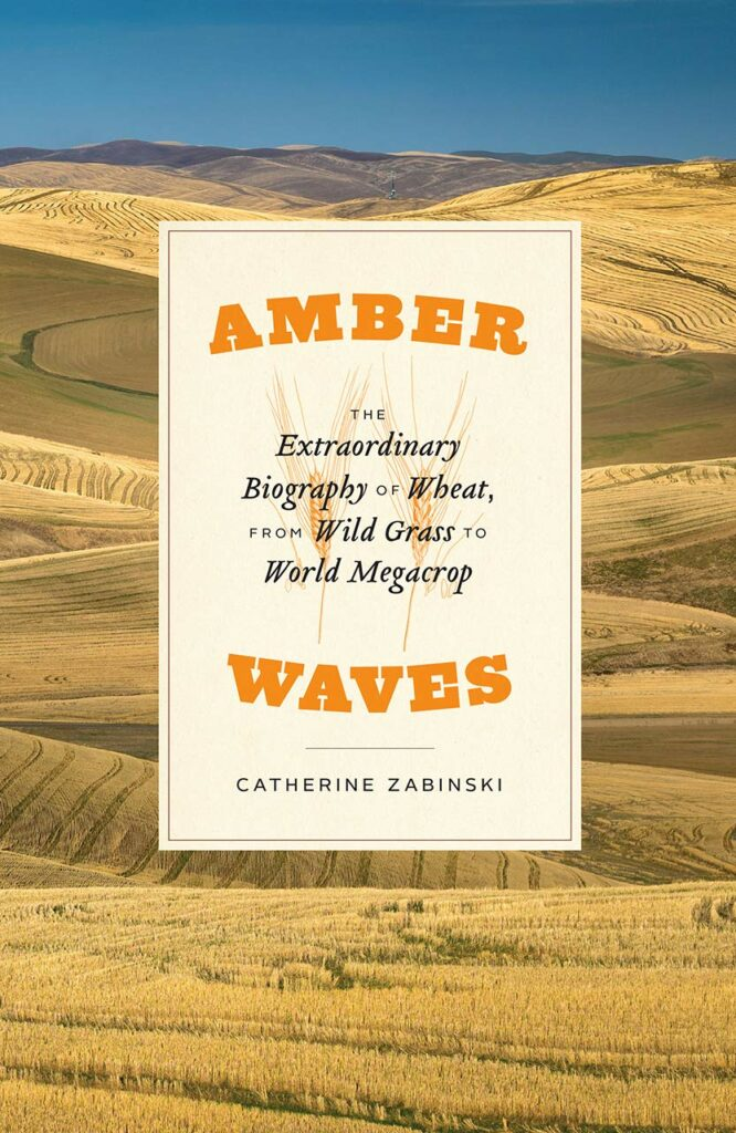 Amber Waves book cover