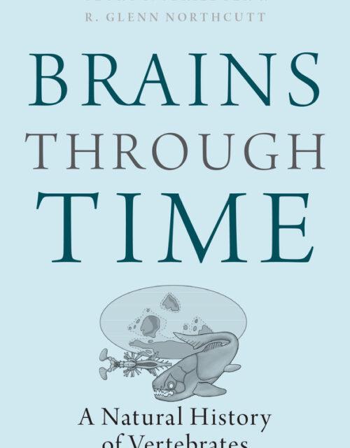 BRAINS THROUGH TIME by Georg Striedter and R. Glenn Northcutt
