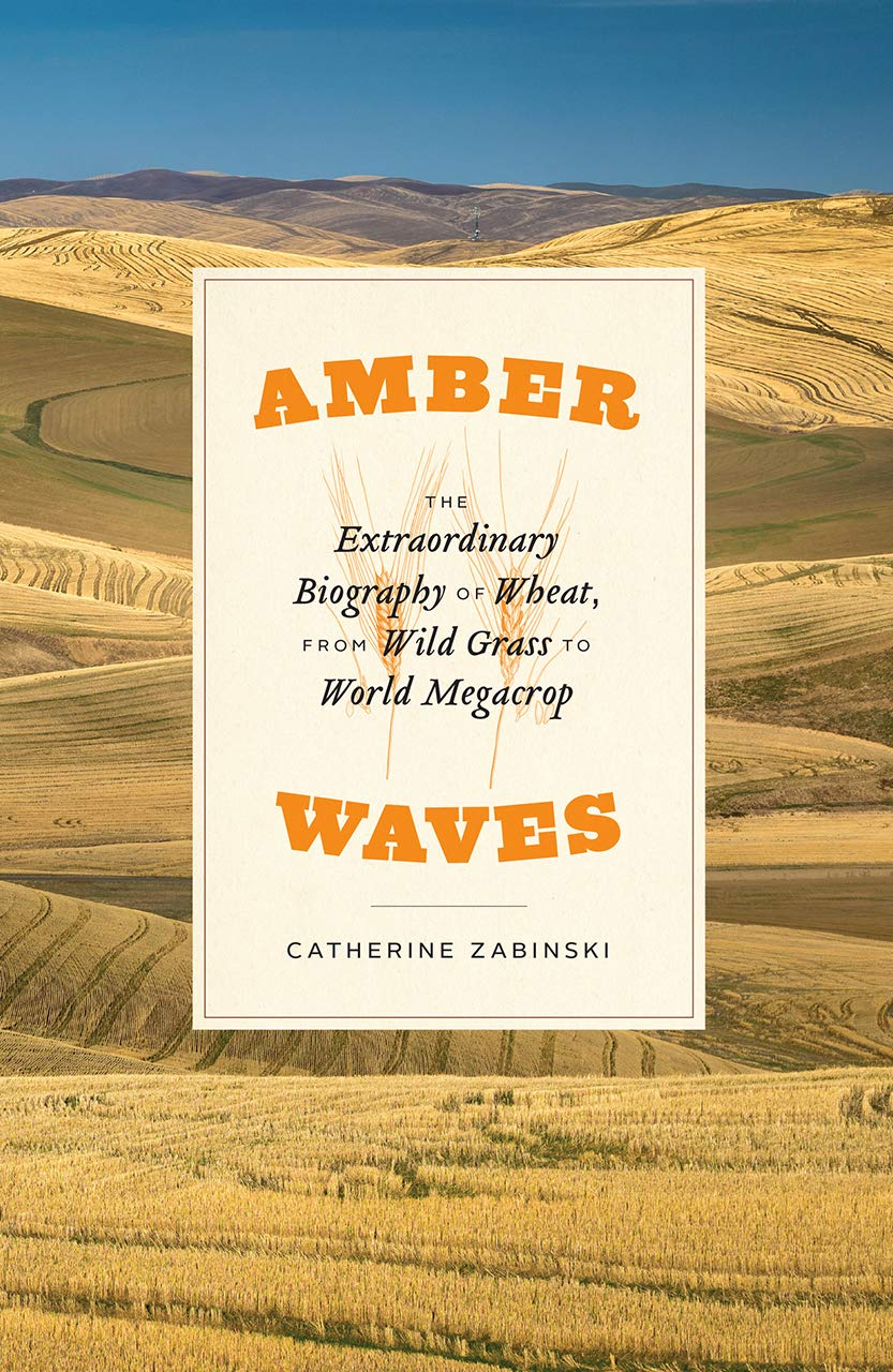 Catherine Zabinski, AMBER WAVES (2020)