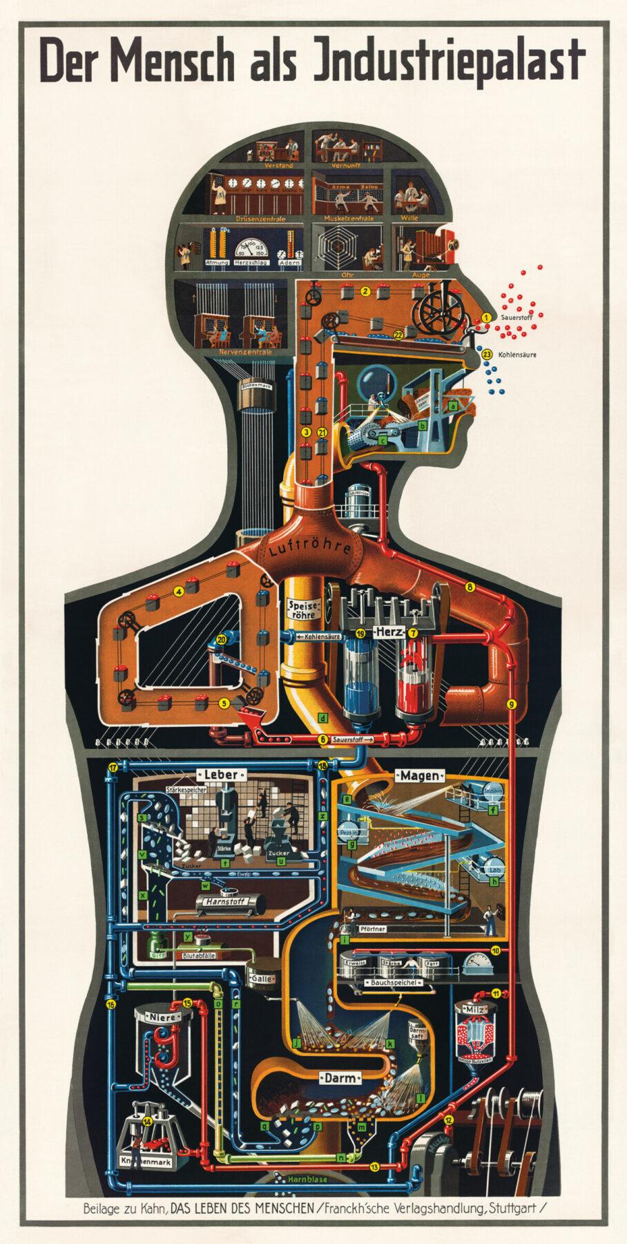 Der Mensch als Industriepalast (Man as Industrial Palace), 18.9 x 37 in.; 4-color (Stuttgart: Kosmos/Franckh'sche Verlag, 1926). Art: Fritz Schüler. Image courtesy of Thilo von Debschitz.