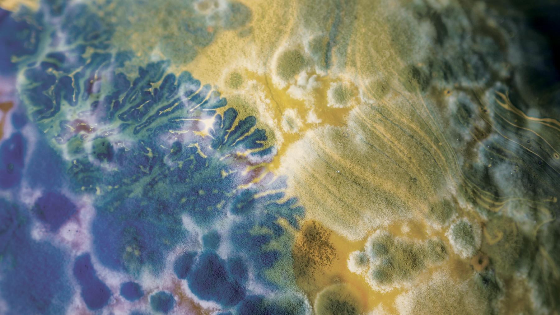 what is biodesign challenge grushkin